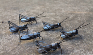 Scrap Metal Insects by John Kennedy Brown